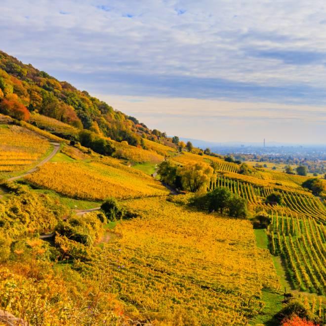 Baden wijnstreek, Duitsland