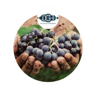 De Grote Hamersma - biologische wijnen en druiven