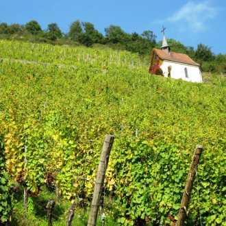 De Elzas wijnstreek | Frankrijk