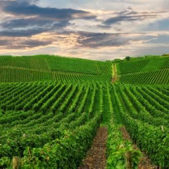 Ribera del Duero wijnstreek, Duitsland