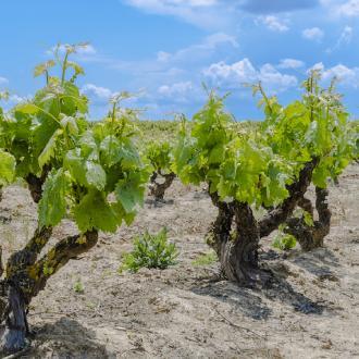 Ribera del Duero wijnstreek, Spanje
