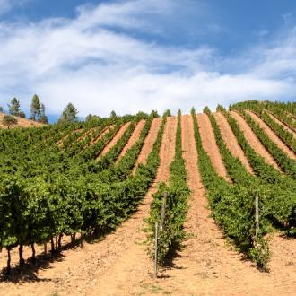 Rueda wijnstreek | Spanje