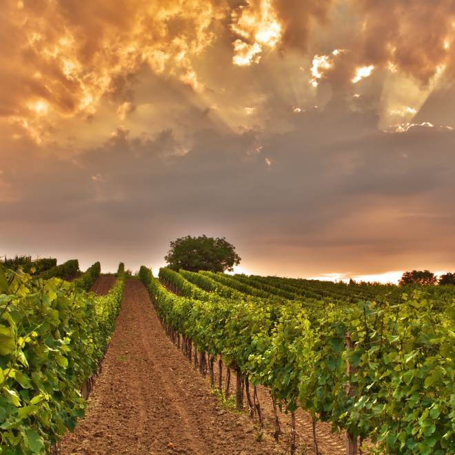 Veneto wijnstreek, Italië