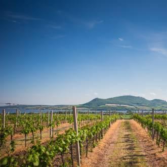 Wijnstreek, Frankrijk