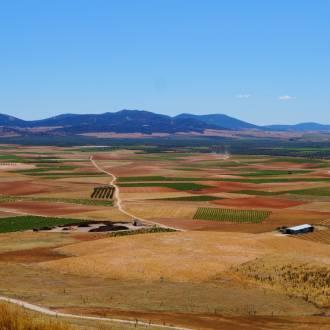 Wijnstreek La Mancha, Spanje