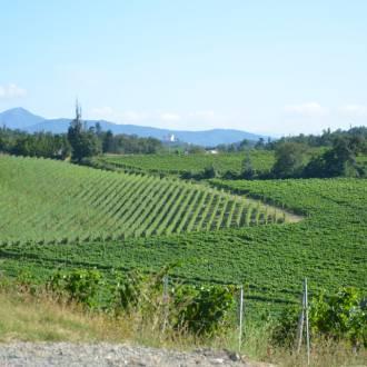 Mediterrane wijnstreek