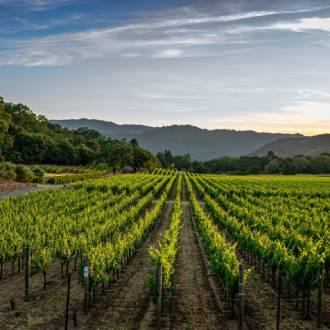 Wijngaard in wijnstreek