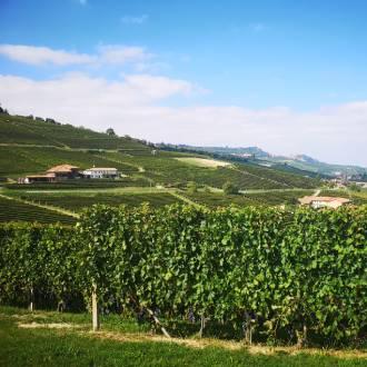 Piemonte wijnstreek, Italië