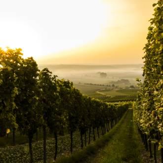 Duitse wijnstreek