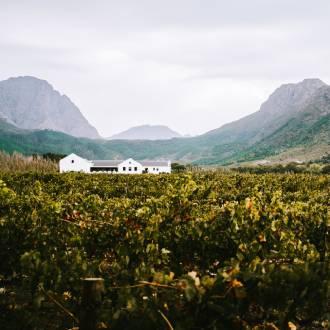 Wijnstreek Zuid-Afrika
