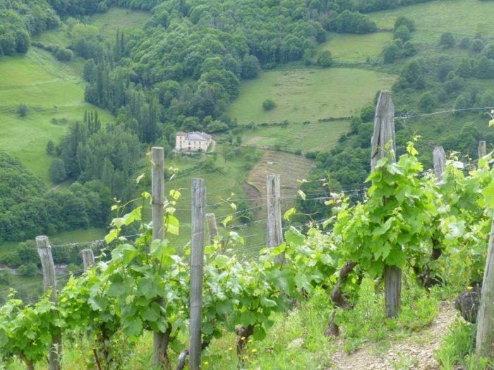 Asturias wijngebied | De wijnen worden erkend als High Mountain wines van Heroic Viticulture, een kwaliteitszegel dat ook is toegekend aan Ribeira Sacra in Galicie en Priorat in Catalonië.