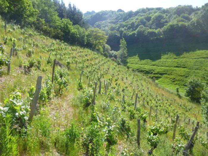 Asturias-Cangas wijnstreek | De percelen zijn klein, liggen op behoorlijk steile hellingen van harde bodem van schist en leisteen.