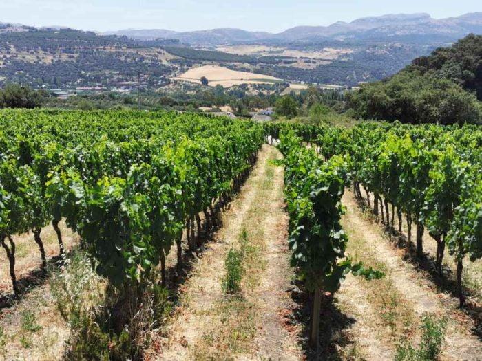 Wijnstreek Ronda-Malaga   Kent een paar wijngebieden, waaronder de Sierras de Malaga, rondom het witte stadje Ronda dat gelegen is aan weerszijden van de diepe kloof met rivier de Tajo.